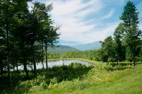 Properties with over an acre of land vt land for sale for Cost of building a house in vermont