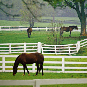 Equestrian Communities Asheville Nc Horses Homes Farms