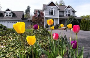 tulips_house