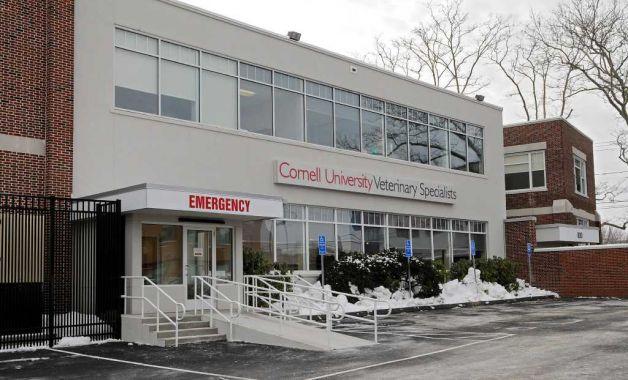 cornell vet center