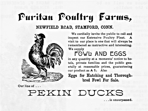 puritan-poultry-farms-ad