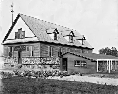 puritan-poultry-farms