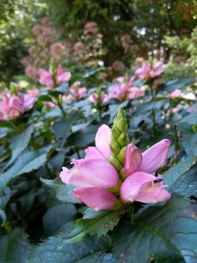 Traditional Landscape by anne houser//dropseed studio//kinghorn gardens